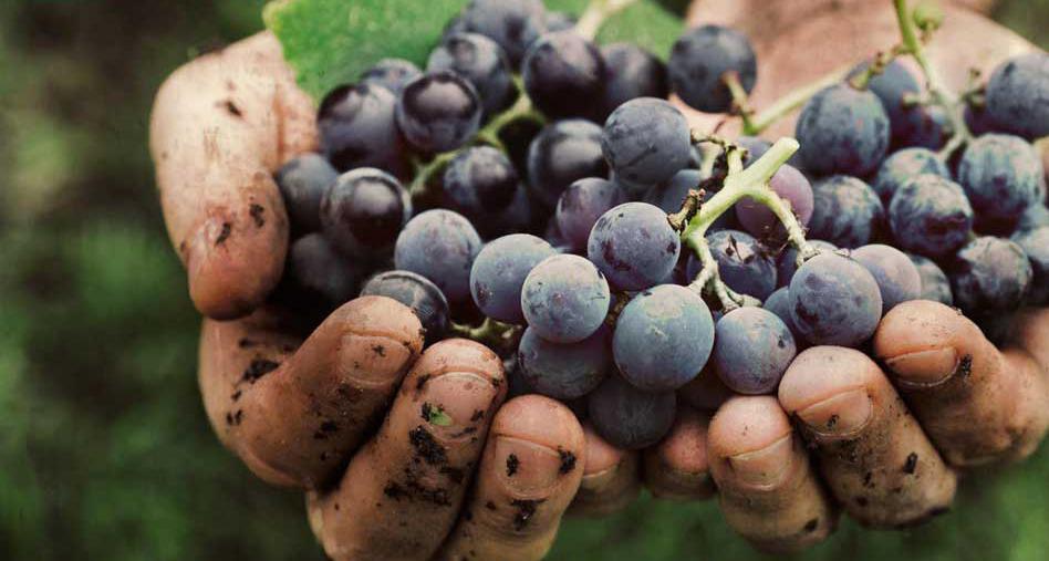 винарско оборудване
